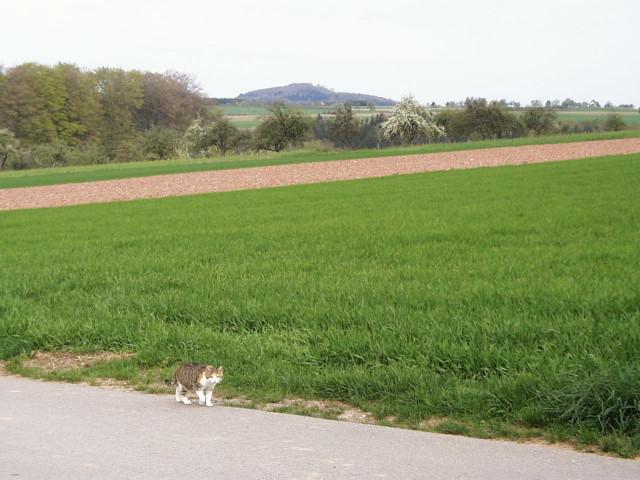 blick-vom-wagenweg-zum-katzenbuckel.jpg
